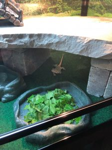 bearded dragon food dish and rock hiding area