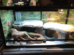 bearded dragon enclosure - perfect setup